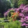 Rhododendron på Berte Toresgård